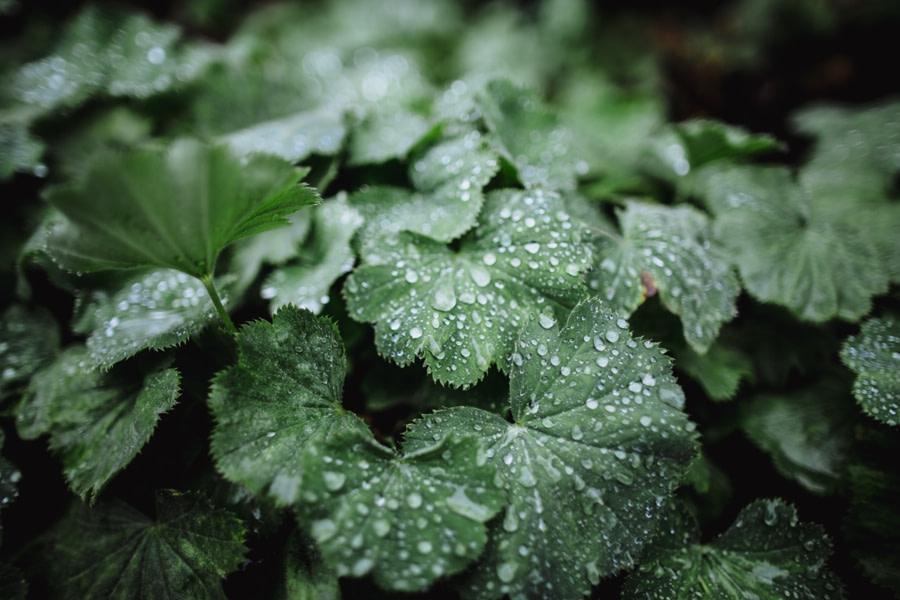 HorticulturalHallWedding32